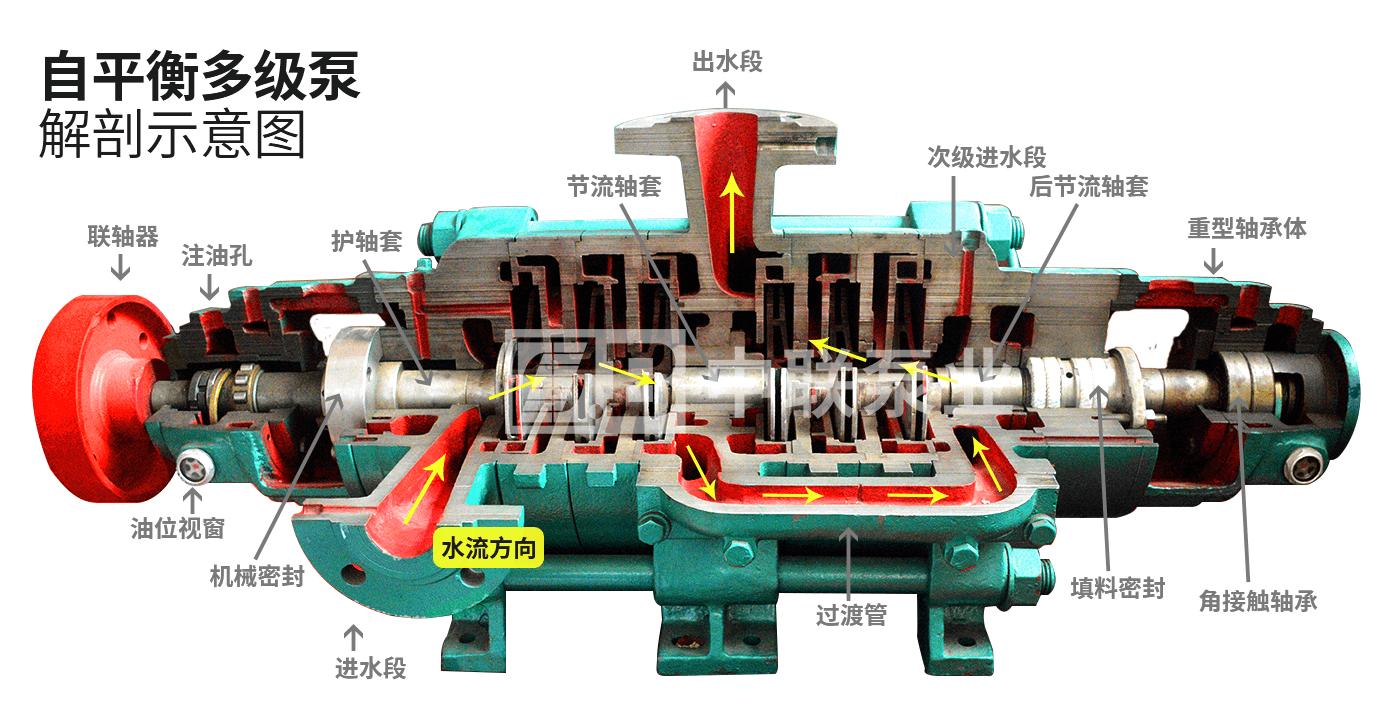 自平衡多級泵結構解剖圖