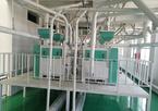10萬噸豌豆加工設備助力企業大發展