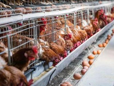 鸡粪有机肥生产线