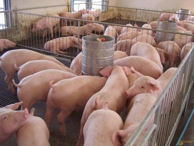 猪粪有机肥生产线
