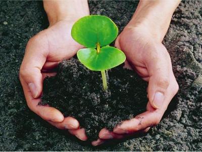 有机肥产值或将达3600亿元 宗源肥业:尚有一问题需解决